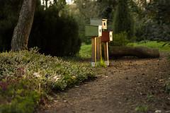 Evening Sun (praetorius.moritz) Tags: sunset sun forest garden 50mm nikon path warmth