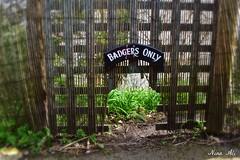 Badgers only! (Nina_Ali) Tags: badgers stives coastalwalks cornwall signs ninaali