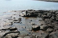 IMG_7648 (chupalo) Tags: sealions lavarocks islasplaza
