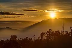 Good morning, sunshine!  #morningglory #morning #goodmorning #sunshine #landscape #landscapes #landscapephotography #landscape_lovers #sunrise #bdg #Bandung #ciwidey #infobandung #infobdg #infobdgcom