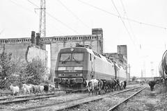 The Dutch Shepherd(s) (cossie*bossie) Tags: nova station electric cows rail db class bulgaria goats locomotive 3000 herd ea 86 zagora 016 dsb schenker