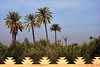 Menara Gardens / palms (Images George Rex) Tags: wall architecture ma morocco maroc marrakech marrakesh finials menaragardens jardinmenara palmette palmettes imagesgeorgerex photobygeorgerex