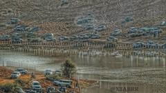 #الرياض #المزاحمية #نفود #الخرارة #زحمة #تطعيس #بحيرة #رمل #ماء #سيارات  #Cars #car #Sand #Lake #water #السعودية #ksa #saudiarabiatag  #saudiarabia # #sonyalpha  #  # # # #⛵ # #شجرة #شجر #tree #trees (Instagram x3abr twitter x3abrr) Tags: trees lake tree cars water car sand saudiarabia بحيرة ksa سيارات ماء شجرة السعودية الرياض زحمة رمل شجر sonyalpha تطعيس نفود المزاحمية الخرارة saudiarabiatag