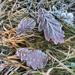 #winter #fevik #norwayfoto #norway (imcalledjin) Tags: winter norway fevik norwayfoto