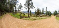 Mount Dromedary