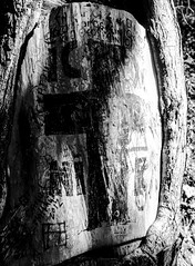 Religion on the woods... (Christos Sevaslian) Tags: trees light sun white black tree forest woods christ cross symbol god traditional religion jesus hellas greece tradition orthodox din och samos vitt svart 宗教 religione религия أبيض クロス crnobijeli 十字 وأسود دين イエス ελλαδα צלב σαμοσ ישו ορθοδοξια μαυρο يسوع кросс الصليب δεντρο φωσ исус χριστοσ ηλιοσ λευκο δασοσ ιησουσ σταυροσ θρησκεια սպիտակ συμβολο եւ 흑백의 tvär սեւ կրոն блацк вхите seeninmacedoniagroup