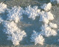 Ice Crystals - Ice Flowers (keibr) Tags: winter snow ice crystals icecrystals hola iceflowers prstmon blipfoto prastmon keibr nearblip ngermanlanriver 160115keibr