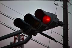 Red signal (@shinxing) Tags: flower voigtlander sigma dp deckel foveon mirrorless dynarex 90mmf34