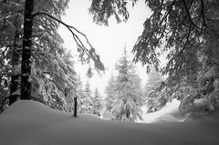 winter tale. (jrseikaly) Tags: winter lebanon white snow tree forest jack photography high dynamic cedar range arz hdr cedars seikaly jrseikaly