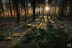After Noon (NeoNature) Tags: wood trees sunset shadow sun france nature forest canon landscape photography soleil scenery afternoon coucher ombre arbres pines vegetation normandie paysage normandy foret calvados bois sapins apresmidi