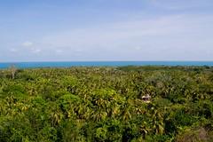 Isla Fuerte desde el faro (Races annimas) Tags: costa arbol atardecer mar colombia pescador caribe pescar pelcano islafuerte arbolquecamina