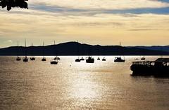 esperando (Ruby Ferreira ®) Tags: sunset mountain boats bay branches silhouettes pôrdosol traps baía silhuetas southernbrazil floripasc armadilhas
