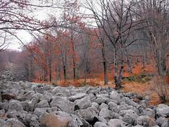 Stone river on Vitosha Mountain, Bulgaria -    ,  (Stella VM) Tags: autumn mountain nature stone forest river landscape bulgaria   vitosha         kladnitsa