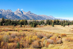Autumn Meadow In The Tetons (Robert F. Carter Travels) Tags: autumn mountain mountains fall nationalpark fallcolors meadow meadows grandtetons tetons nationalparks mountainscape grandtetonnationalpark mountainscapes