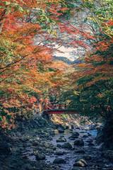 maple with old bridge () in Japan Shizuoka     DSC_7075 (Ming - chun ( very busy )) Tags: travel bridge tree river leaf maple nikon colorful 85mm   nikkor f18  shizuoka   d800 streetshot   shuzenji       85mmf18    traveljapan streetsnap  streetscence f1885mm      shuzenjionsen