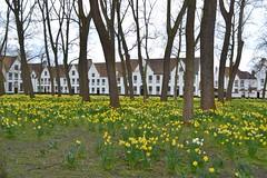 The Begijnhof, Bruges. (greentool2002) Tags: