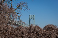 Verrazano-Narrows Bridge (Erin Cadigan Photography) Tags: auto road city nyc newyorkcity bridge trees newyork tower horizontal architecture brooklyn river outdoors bay harbor daylight traffic suspension steel bluesky cable brush double structure deck transportation transit toll vehicle mta borough daytime hudson statenisland bushes span narrows roadway verrazano verrazanonarrows fortwadsworth