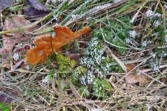 ein bisschen Winter ist noch da (mama knipst!) Tags: winter natur eifel eis bltter moos