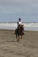 IMG_EOS 7D Mark II201604032348 (David F-I) Tags: horse equestrian horseback horseriding trailriding trailride ctr tehapua watrc wellingtonareatrailridingclub competitivetrailriding sporthorse equestriansport competitivetrailride april2016 tehapua2016 tehapuaapril2016 watrctehapuaapril2016