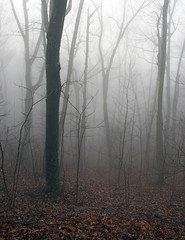 Foreboding Woods (nrg_crisis) Tags: fog woods foreboding spooky