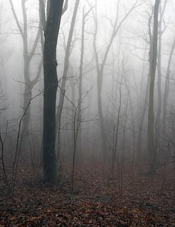 Foreboding Woods