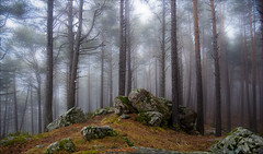 Bosc d'Engolasters emboirat (Zac) Tags: mist tree fog forest magic magical andorra ricard ladscape engolasters esenciadelanaturaleza rdelacasa magicalforets