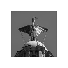 An icon of Liverpool (andyrousephotography) Tags: sculpture bird phoenix statue liverpool icon threegraces cormorant liverbirds royalliverbuilding 3graces carlbernardbartels