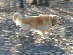 Sunny 17/52 (Lianne (calobs)) Tags: dogs for weeks 52