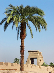 Temple of Karnak Egypt (shaire productions) Tags: old building tree heritage history temple design photo exterior image columns picture culture structure architectural photograph palmtree historical cultural ancientegypt archaic templeofkarnak egyptandthenile