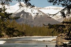 _1190515.jpg (Bucky-D) Tags: ca canada mountains rockies alberta banff bowriver bowfalls banffnationalpark canadianrockies fz1000