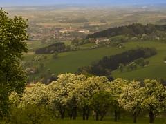 Mostbirnblte (schasa68) Tags: trees panorama nature landscape austria sterreich outdoor hiking natur blte landschaft bume niedersterreich wandern ausblick stift landscpe loweraustria mostviertel seitenstetten baumbluete mostbirnwanderung