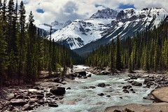 Mistaya River and a View Beyond to the Peaks of the Canadian Rockies (Icefields Parkway) (thor_mark ) Tags: trees canada mountains nature river rapids snowcapped canvas evergreen alberta portfolio day4 banffnationalpark icefieldsparkway canadianrockies evergreentrees highway93 project365 lookingsw mistayariver waputikmountains mountsarbach mountainsindistance blueskieswithclouds kaufmannpeaks nikond800e mountainsoffindistance lookingtomountainsofthecontinentaldivide hillsideoftrees lookingtocontinentaldivide centralmainranges northwaputikmountains mistayacanyonarea