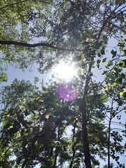 Finally at Home (mudasirkhan2) Tags: nature sunshine srinagarjammuandkashmir