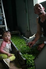 Two life generations around tea leaves (Anutasclera) Tags: japan spring asia tea greentea kansai eastasia  sencha  japanesetea favoritepeople shincha  japanportraits firstflush wazuka obubutea