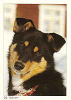 lapinporokoira (tora_fin) Tags: dog postcard trade