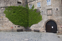 Ivy castle (quinet) Tags: castle germany schloss chteau 2012 castleroad burgenstrase
