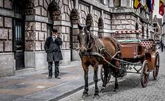 Coachman and horse (Ludo_Jacobs) Tags: horse cityhall kutsche tourist antwerp rathaus hdr antwerpen stadhuis paard coachman koets kutscher koetsier