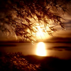 Happy Weekend everyone! (maya the viking_girl) Tags: sunset sea sky sun reflection nature water silhouette norway landscape golden dof sundown outdoor warmth straws warmlight tjme debthoffield