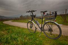 Riding on Vloroute du Vignoble d'Alsace (kewl) Tags: france bike vineyard alsace cycleway basrhin molsheim 67560 rosheim eurovelo5 alsacechampagneardennelorraine molshengass