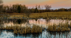 early morning (vernonbone) Tags: ontario landscape outside nikon eastpoint d3200 april2016
