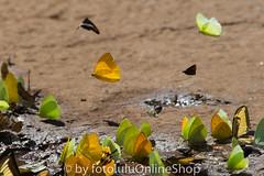 Argentinien_Insekten-73 (fotolulu2012) Tags: tierfoto