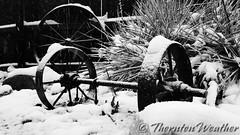 April 16, 2016 - Backyard snow in Thornton. (ThorntonWeather.com)