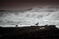 Storm at sunset (frfourrier) Tags: ocean sunset seagulls colour nature birds canon colours sigma wave 5d