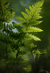 Fern Abstract (Alan MacKenzie) Tags: blur macro nature forest woodland sussex bokeh ferns highweald