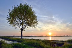 Sunrise () Tags: sky sun tree colors field sunrise rice alba country campagna cielo fields sole albero colori hdr risaia risaie