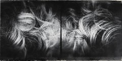Curls-4881 (Poetic Medium) Tags: blackandwhite stilllife abstract male hair diptych ipod mextures kitcamghostbird