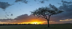 a simple sunset over the Serengeti plains (charlesgyoung) Tags: africa tanzania nikon safari d3 serengetinationalpark charlesyoung kleinscamp nikonfx nomadtanzania karineaignerphotographyexpedition