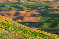 On Steptoe Butte (Matthew Singer) Tags: washington unitedstates garfield palouse steptoebutte