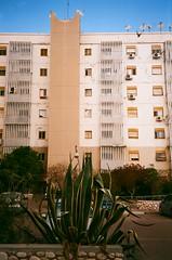 *** (Boris Rozenberg) Tags: street city blue trees windows light sky plants sun plant building film home window architecture analog 35mm day fuji sunny neighborhood fujifilm 35 praktica pointshoot compact compactcamera fujicolor buyfilmnotmegapixels