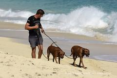 Dog Walker ( Freddie) Tags: stmaarten maho sxm sintmaarten simpsonbay princessjulianainternationalairport dutchcaribbean sxmtncm thefriendlyisland